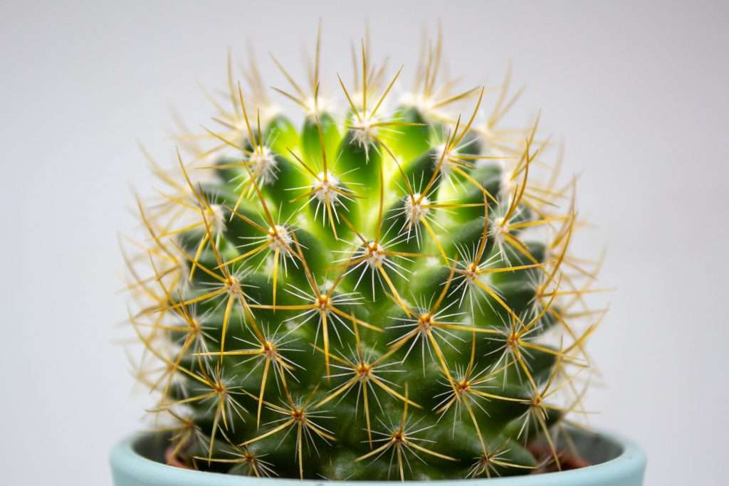 Will a Cactus Grow Bigger in a Bigger Pot