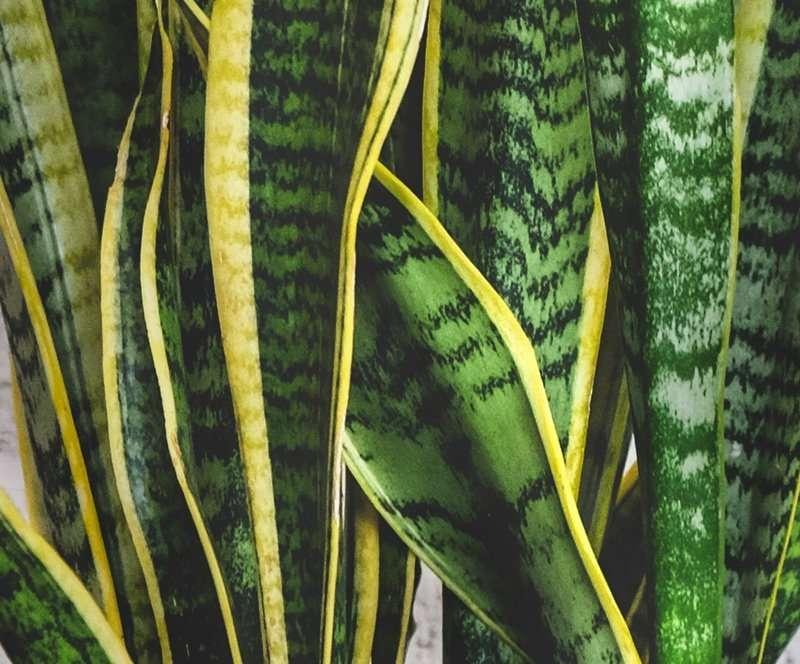 Snake Plank Closeup