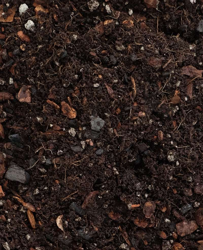 Pilea Peperomioides Soil